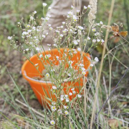 Vendange nature et bio Kumpf et Meyer à Rosheim, Alsace, France © Stéphane Louis