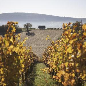Vigne nature et bio Kumpf et Meyer à Rosheim, Alsace, France © Stéphane Louis