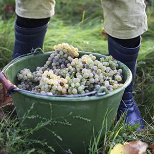 Vin nature Natural Wine Bio Organic Kumpf et Meyer à Rosheim, Alsace, France © Photographie Stephane Louis