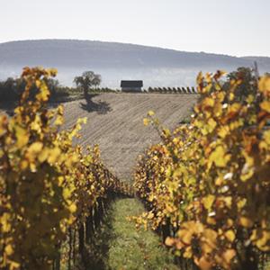 Vin nature Natural Wine Bio Organic Kumpf et Meyer à Rosheim, Alsace, France © Stephane Louis